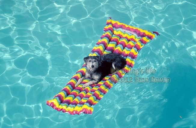 Photo of Dog in Pool