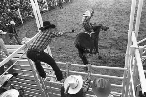 Rodeo Photo of bucking bronco
