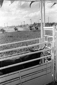 rodeo photos