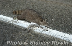 Road Kill, Boston Corporate Photographer