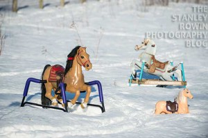 Photo of toy horses in snow