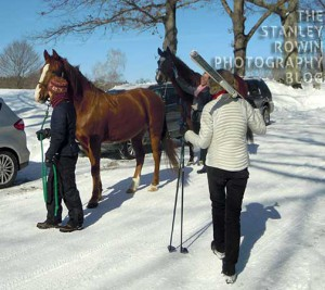 horses on cross country ski trails