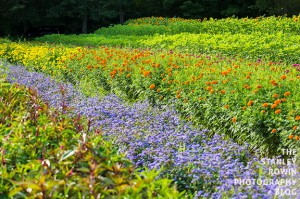 Field of Flowers photo