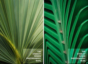 Photo of stacked chars and palm fronds
